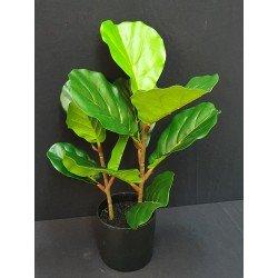Maceta Ficus